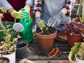 potting vegetables