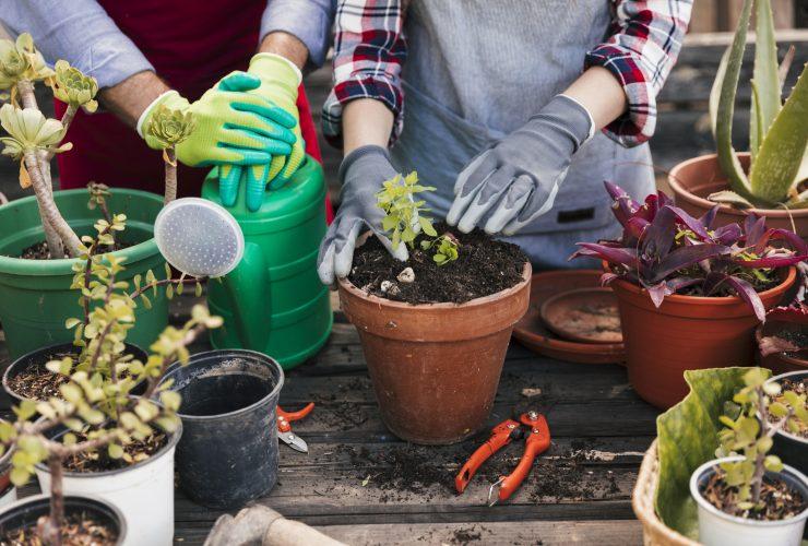 potting vegetables