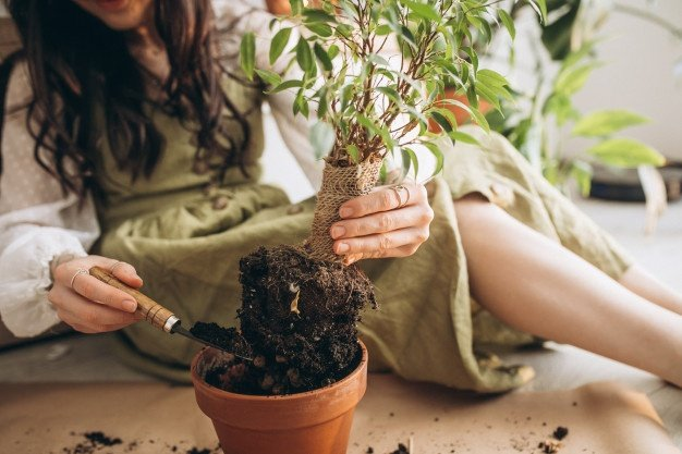 young woman cultivating plants home 1303 22974