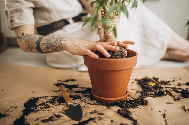 young woman cultivating plants home 1303 23016