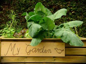 Raised bed vegetable gardening