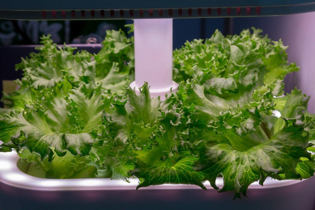 Indoor-vegetable-light