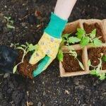Planting-new-seedlings