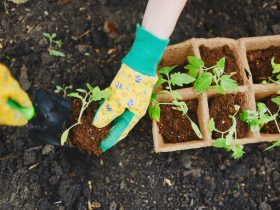 Planting-new-seedlings