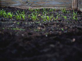 Garden-Rich-soil